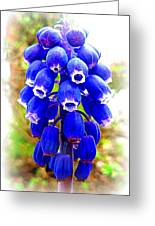 Muscari Grape Hyacinth Greeting Card by The Creative Minds Art and Photography
