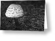 Mushroom Greeting Card by Adam Romanowicz