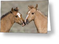 Mustang Foals Greeting Card by JeanLouis Klein and MarieLuce Hubert