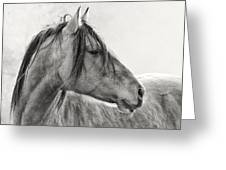 Mustang Greeting Card by Ron  McGinnis