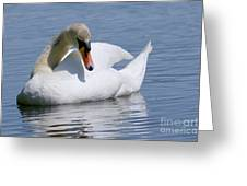 Mute Swan 1 Greeting Card by Sharon  Talson