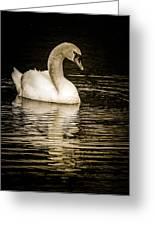 Mute Swan II Greeting Card by Jim Nelson
