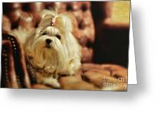 My Chair Greeting Card by Lois Bryan