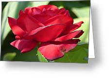 My First Rose Greeting Card by Janina  Suuronen