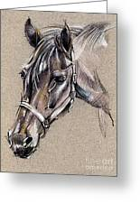 My Horse Portrait Drawing Greeting Card by Daliana Pacuraru