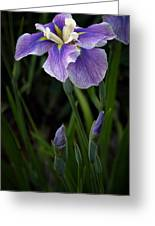 My Iris Greeting Card by Penny Lisowski