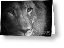 My Lion Eyes Greeting Card by Thomas Woolworth