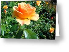 My Love Is Like A Rose Greeting Card by Kay Gilley
