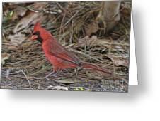 My Name Is Red Greeting Card by Deborah Benoit