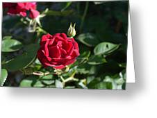 My Red Rose Greeting Card by Alys Caviness-Gober