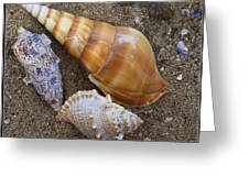 My Seashells Greeting Card by  Photographic Art and Design by Dora Sofia Caputo