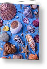 My Shell Collection Greeting Card by Garry Gay