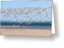 My Tern Greeting Card by Bill Wakeley