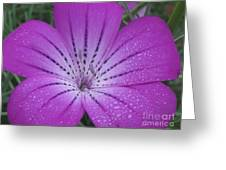 Mysterious Photography Greeting Card by Tina Marie