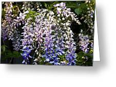 Nancys Wisteria 3 Db Greeting Card by Rich Franco