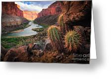 Nankoweap Cactus Greeting Card by Inge Johnsson