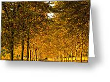 Napa Valley Fall Greeting Card by Bill Gallagher