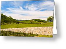 Napa Vineyard #2 Greeting Card by Mick Burkey