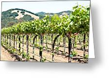 Napa Vineyard Grapes Greeting Card by Shane Kelly