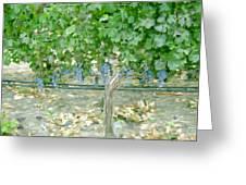 Napa Vineyard Greeting Card by Paul Tagliamonte