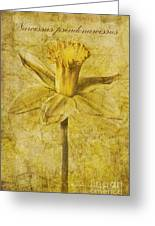 Narcissus Pseudonarcissus Greeting Card by John Edwards