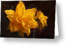 Narcissus Sweet Sue In Full Bloom Greeting Card by Rona Black
