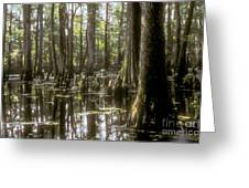 Natchez Trace Wetlands Greeting Card by Bob Phillips