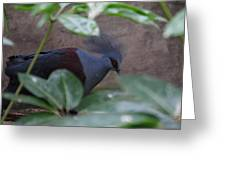 National Zoo - Birds - 011329 Greeting Card by DC Photographer