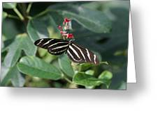National Zoo - Butterfly - 12121 Greeting Card by DC Photographer