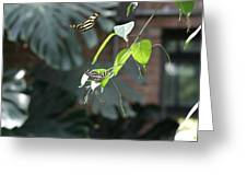 National Zoo - Butterfly - 12123 Greeting Card by DC Photographer