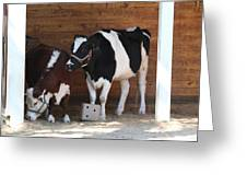 National Zoo - Cow - 01133 Greeting Card by DC Photographer