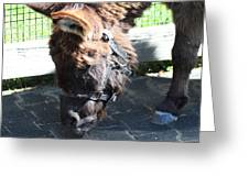 National Zoo - Donkey - 01139 Greeting Card by DC Photographer