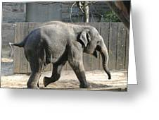 National Zoo - Elephant - 12126 Greeting Card by DC Photographer