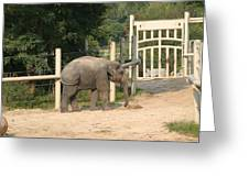 National Zoo - Elephant - 12127 Greeting Card by DC Photographer