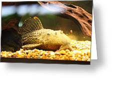 National Zoo - Fish - 011311 Greeting Card by DC Photographer