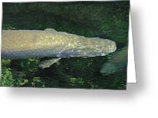 National Zoo - Fish - 12125 Greeting Card by DC Photographer
