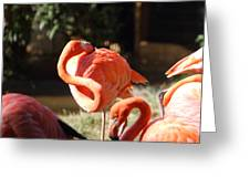 National Zoo - Flamingo - 01135 Greeting Card by DC Photographer