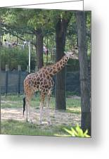 National Zoo - Giraffe - 12124 Greeting Card by DC Photographer