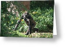 National Zoo - Gorilla - 121220 Greeting Card by DC Photographer