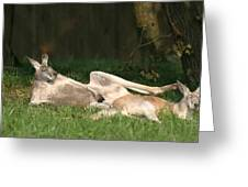 National Zoo - Kangaroo - 12124 Greeting Card by DC Photographer