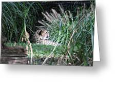 National Zoo - Leopard - 01131 Greeting Card by DC Photographer