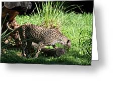National Zoo - Leopard - 01137 Greeting Card by DC Photographer