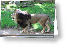 National Zoo - Lion - 01131 Greeting Card by DC Photographer