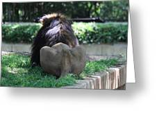 National Zoo - Lion - 011314 Greeting Card by DC Photographer