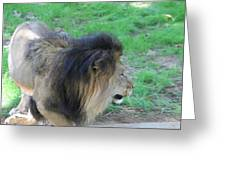National Zoo - Lion - 01133 Greeting Card by DC Photographer