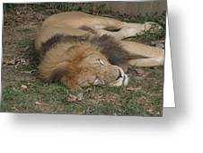 National Zoo - Lion - 12121 Greeting Card by DC Photographer