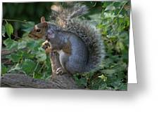 National Zoo - Mammal - 12123 Greeting Card by DC Photographer