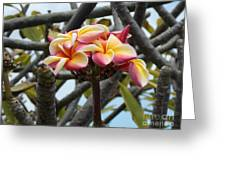 Natural Bouquet  Greeting Card by Mindy Sue Werth