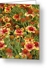 nature - flowers -Blanket Flowers Six -photography Greeting Card by Ann Powell