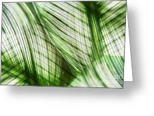 Nature Leaves Abstract in Green Greeting Card by Natalie Kinnear